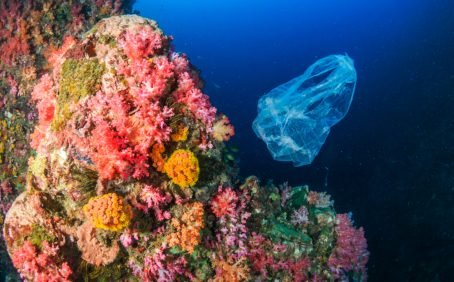 Despite the label, biodegradable plastic bags might not break down all that much faster than conventional bags, a new study found.