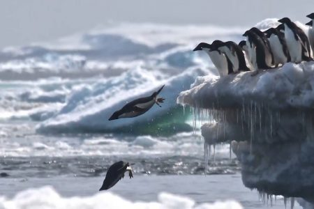 Today's Video of the Day from the National Science Foundation describes a recent study on Adéie penguins led by scientists at Louisiana State University (LSU).
