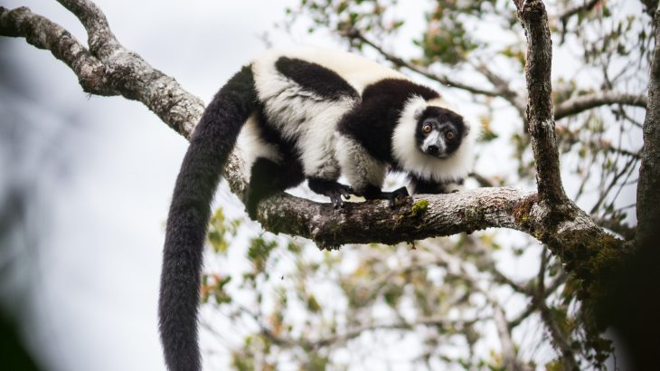 Madagascar's protected areas, which are some of the most important for biodiversity in the world, have suffered terribly from illegal mining, logging, and the pet trade.