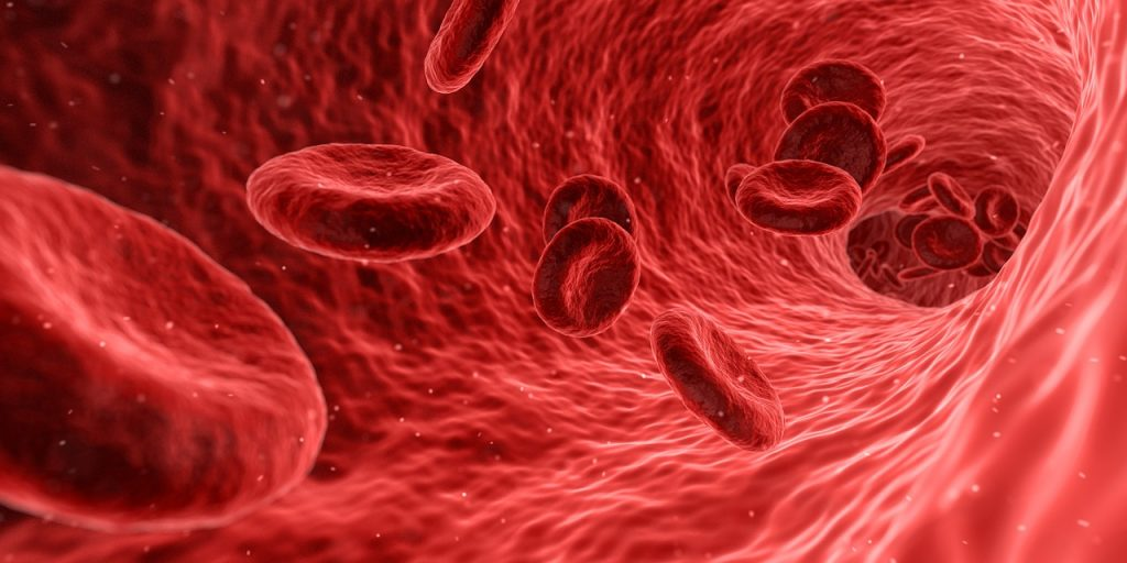red blood cells malaria
