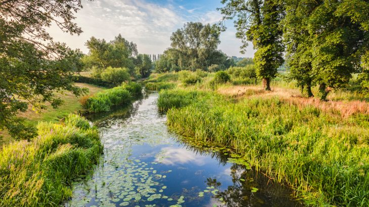 A team of researchers led by King's College London has discovered a broad range of chemicals, including illicit drugs and pesticides, in UK river wildlife.