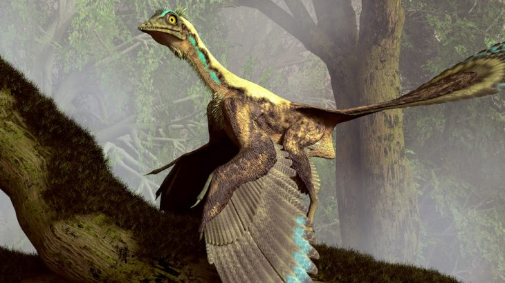 New research from Tsinghua University, Beijing provides evidence to show that dinosaurs may have used running to passively flap their wings before evolving to fly.