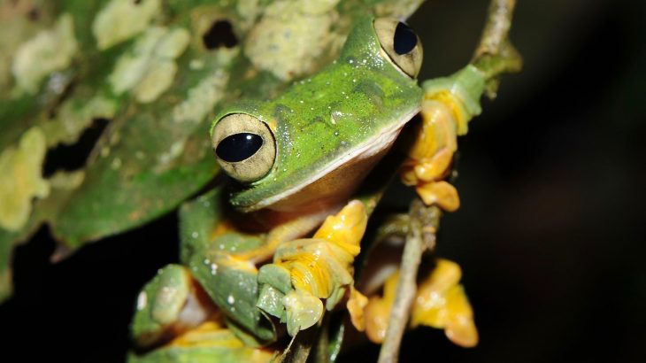 According to a new study, about 1,000 more species of amphibians are seriously threatened than what was previously realized.