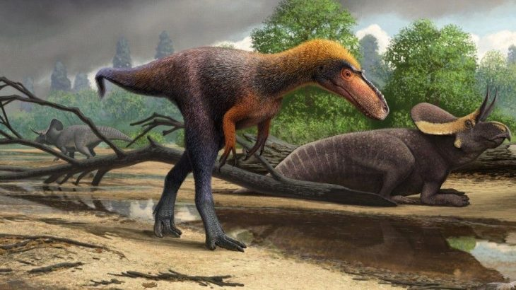 The new tyrannosauroid dinosaur, which was much smaller than the ferocious T. rex, has been named Suskityrannus hazelae.