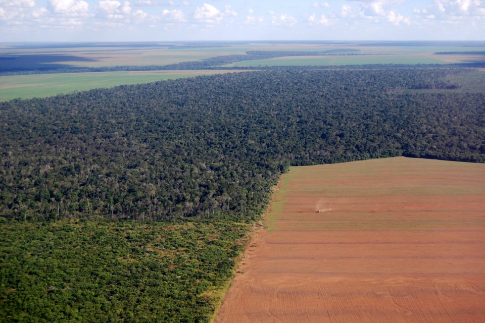 Influence from the west is driving China's demand for soy and soy products, which in turn drives the destruction of Brazil's Amazon.