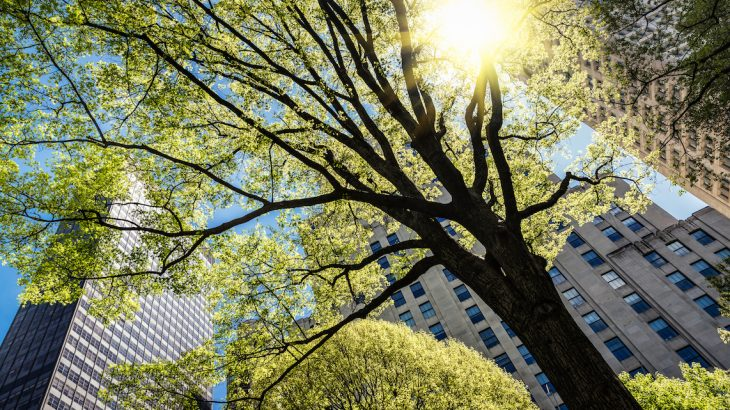 A new study has found that urban trees actually die faster than rural trees – although they grow more quickly – resulting in a net loss of street-tree carbon storage over time.