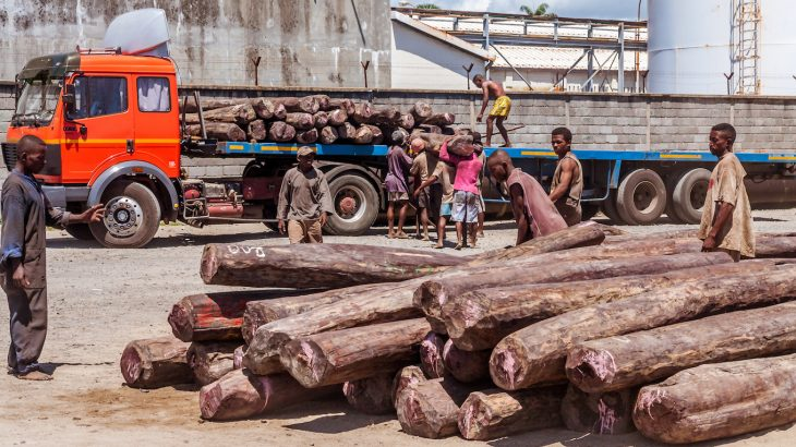 Much of the rosewood poached in Madagascar is exported to China or other friendly locations where it is made into furniture to be sold for high prices.