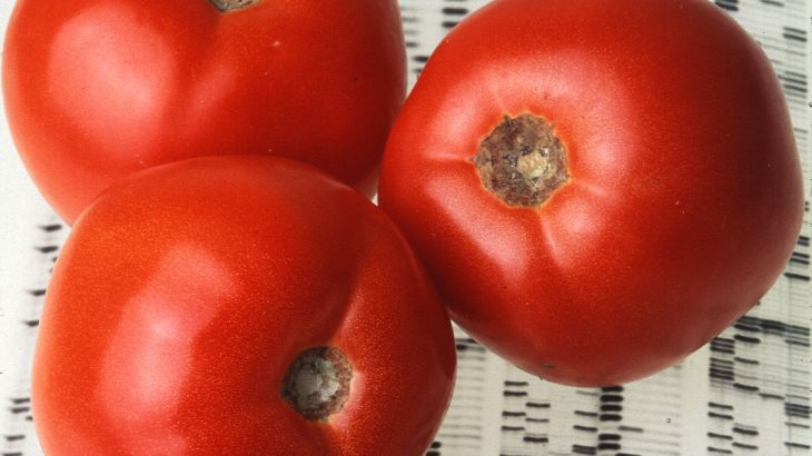 A new study from the Agricultural Research Service (ARS) may have pinpointed a way to give store-bought tomatoes more flavor.