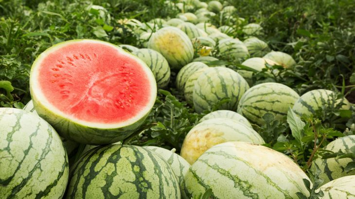 According to researchers, you can train your ears to pick up on the sound of a ripe watermelon by listening to traditional Nigerian music.