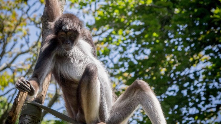 Researchers have determined that hunting is responsible for a 40% average decline of large mammals in the remaining small percentage of intact tropical forests.