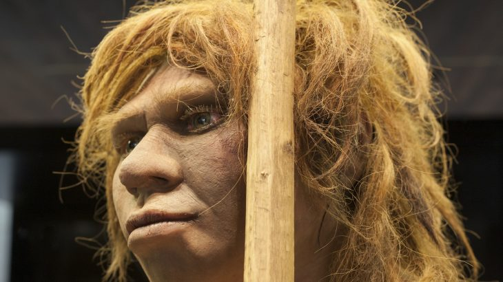 According to researchers from University College London, Neanderthals and modern humans diverged at least 800,000 years ago.