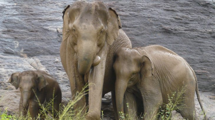 New research suggests that we must re-evaluate our definition of what constitutes an endangered group if we want to protect large animals from irreversible decline.