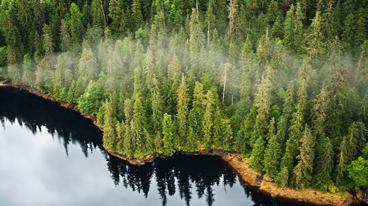 New plans to clear cut large areas of old growth forest in Tongass National Forest in Alaska have been met with opposition.