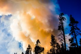 Researchers have assessed the landscape in Yellowstone National Park, where areas that burned in 1988 were affected by fire again in August of 2016.