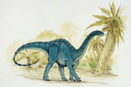 A team of researchers has discovered that an early species of dinosaur crawled on all fours before it grew large enough to walk on two legs.
