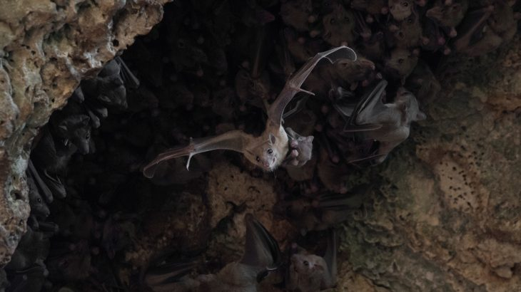 A new study from Tel-Aviv University has revealed that female Egyptian fruit bats living in captivity will trade sex for food.