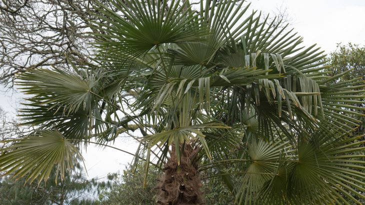 Palm trees are a familiar sight on white sandy beaches in tropical and subtropical climates, but they may soon pop up across the UK due to climate change.