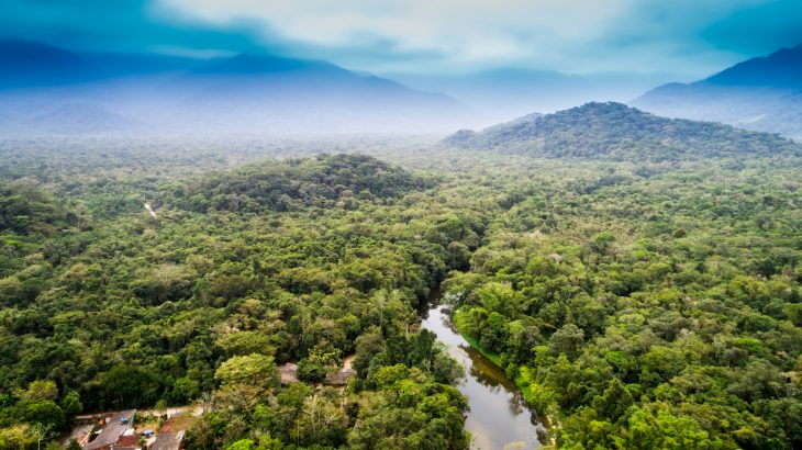 While many early European explorers assumed it to be an inhospitable jungle, the Amazon rainforest once supported humans in higher densities than most would find credible.