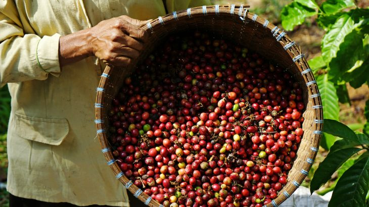 Coffee farms found were found to be using virtual slave labor which raises important questions about the uncertainty of certification labels.