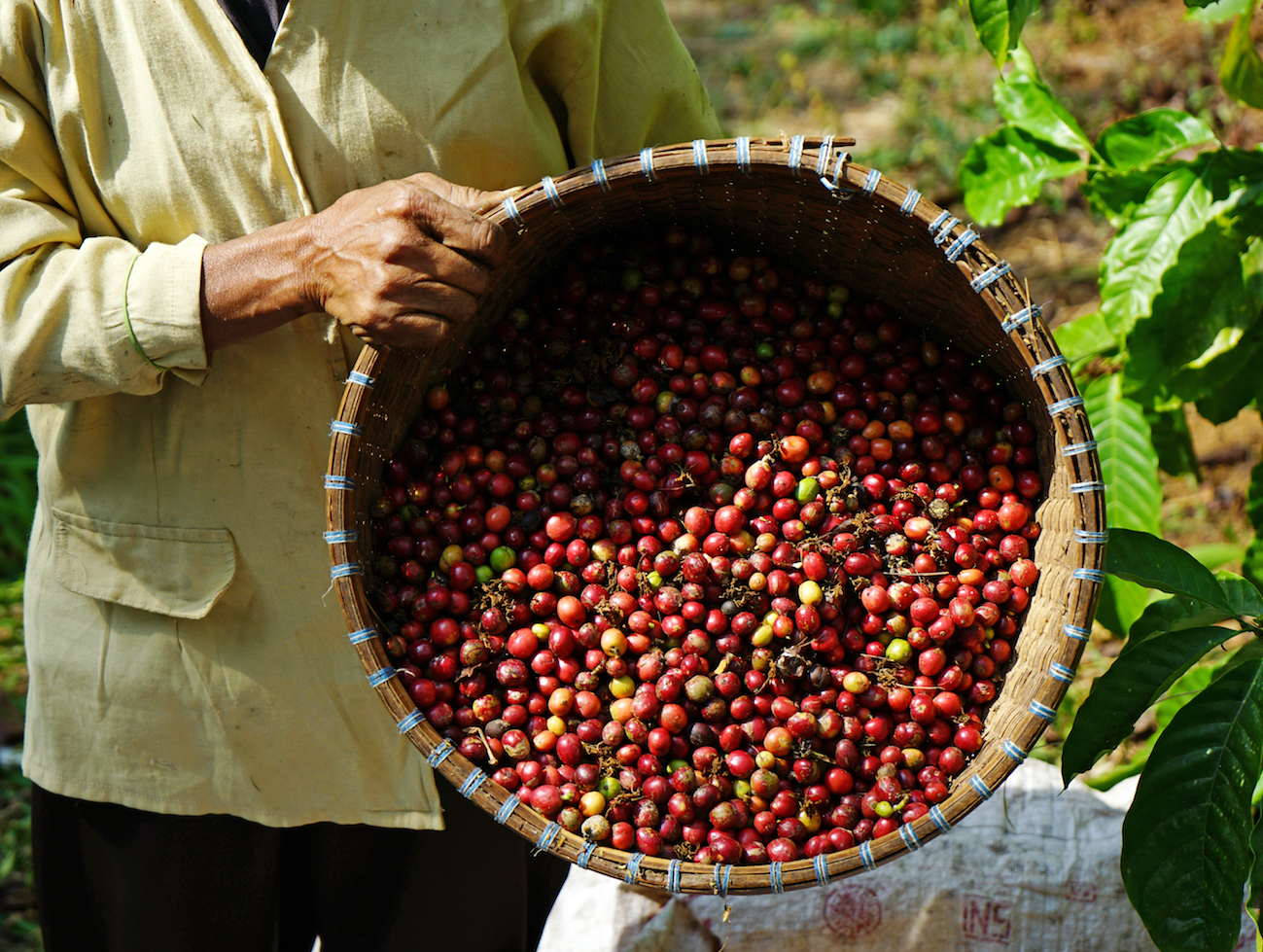 Coffee farms found using slave labor raise alarming regulation questions