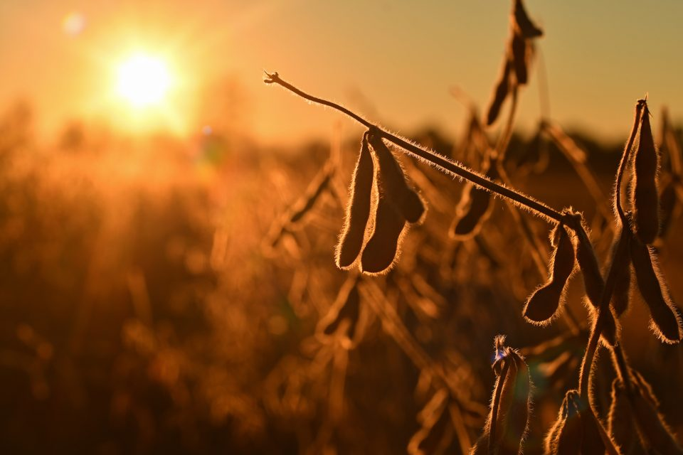 The heat stress associated with climate change will play a larger role in reducing the yields of major U.S. crops than the stress induced by droughts.