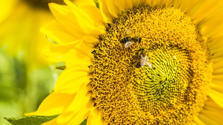 A team of researchers has found that bees are capable of linking mathematical symbols to their corresponding quantities.