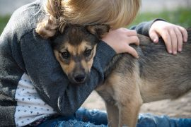 A new study has found that not only can dogs understand their owner's feelings but they will also mirror their owner's stress levels.