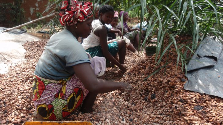 A new study has found that increasing the cost of cocoa could help eliminate child labor from cocoa farms in Ghana, but it would fall on the consumer to pay the premiums.