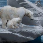 polar bear and cub on ice