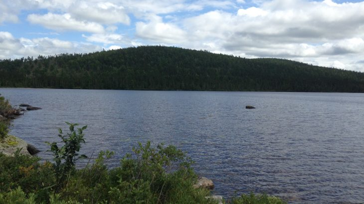 A new study has revealed that the pesticide DDT has persisted in remote lakes in North America for nearly 50 years after it was banned.