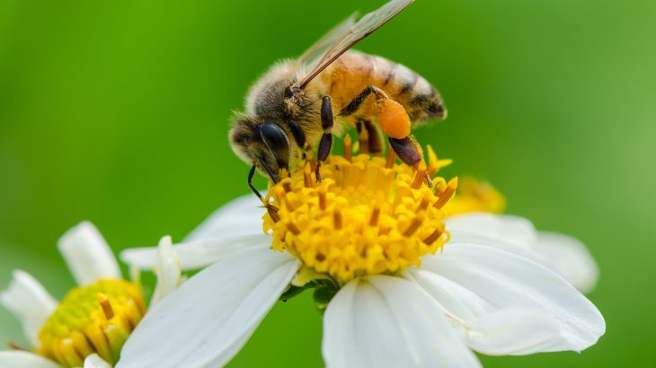 In a new study, researchers from Texas A&M University have discovered that pollen availability and diversity changes depending on the season.
