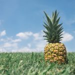 pineapple grows
