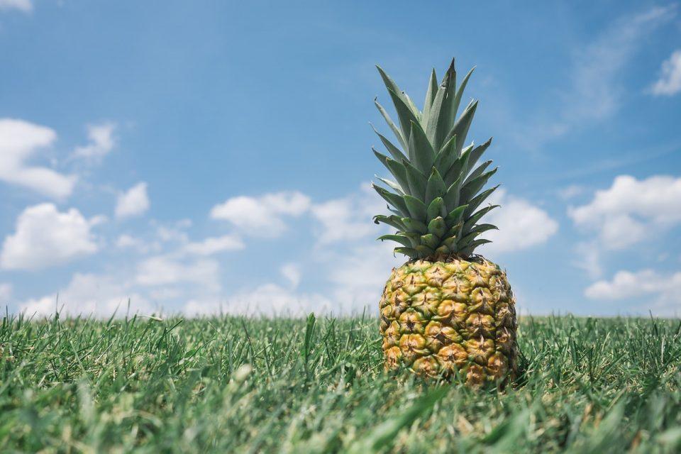 pineapple grows