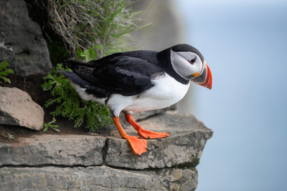 Sea bird die-offs are becoming more common even though ocean temperatures are being pushed up just a fraction of a degree so far.
