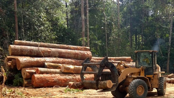Researchers have found that even selective logging practices will not be enough to promote sustainability and regrowth in the Amazon rainforest.