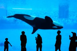 There are currently at least 2,360 cetaceans (whales and dolphins) in captivity worldwide, according to estimates by the Change for Animals Foundation.