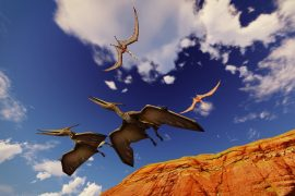 Researchers at the University of Leicester have discovered that pterodactyls were able to fly from the time they were born.