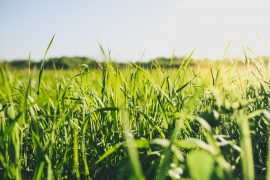 A team of researchers at the University of Würzburg has identified an ion channel that helps to facilitate plant communication.