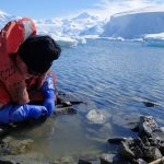 Dr. John Spicer collecting intertidal amphipods from South Cove (Rothera Research Station, British Antarctic Survey) looking west to Ryder Bay on the Western Antarctic Peninsula. (Credit: Simon Morley)