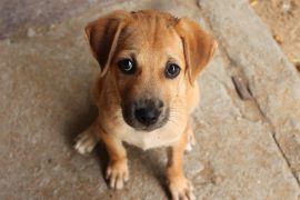 Puppy dog eyes aren't just adorable, but also serve as a useful means of communication, triggering a nurturing response from humans.