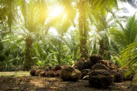 Nestle has committed to 100% responsible palm oil by 2020, but Greenpeace called the company's commitment to monitor its palm oil for deforestation 'inadequate'.