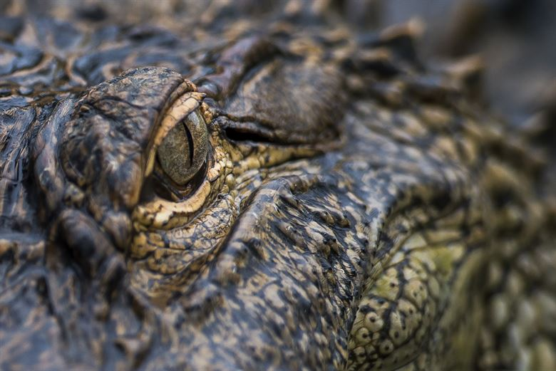 Crocodile distribution could reveal secrets of the Earth's past climate • Earth.com