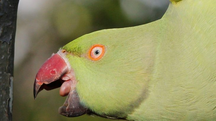 "A new study has found that ""alien"" bird species succeed and thrive in habitats that are similar to their native homes and in locations where other alien species thrive."