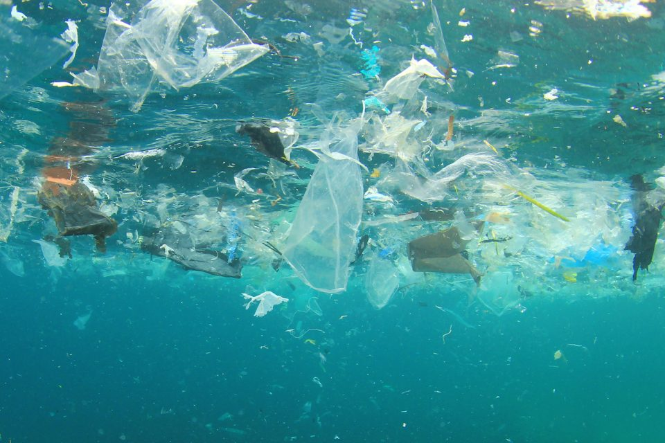 Several new online digital currency systems have been developed to initiate ocean plastic cleanup efforts by offering digital rewards for trash collection.