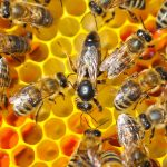 The results of a national survey have revealed that beekeepers in the United States lost 40.7 percent of their honeybee colonies from April 2018 to April 2019.