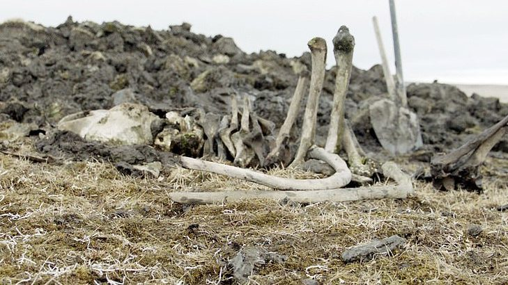 The remains of a woolly mammoth found preserved in Siberian permafrost were accompanied by man-made weapons dating back 10,000 years.