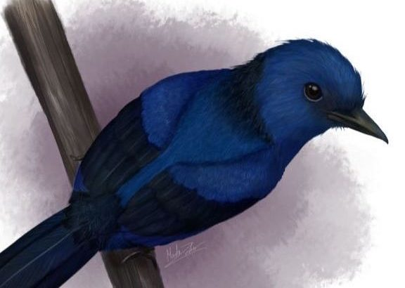Researchers from the University of Bristol have identified blue color tones in prehistoric birds and discovered which birds were predominantly blue.