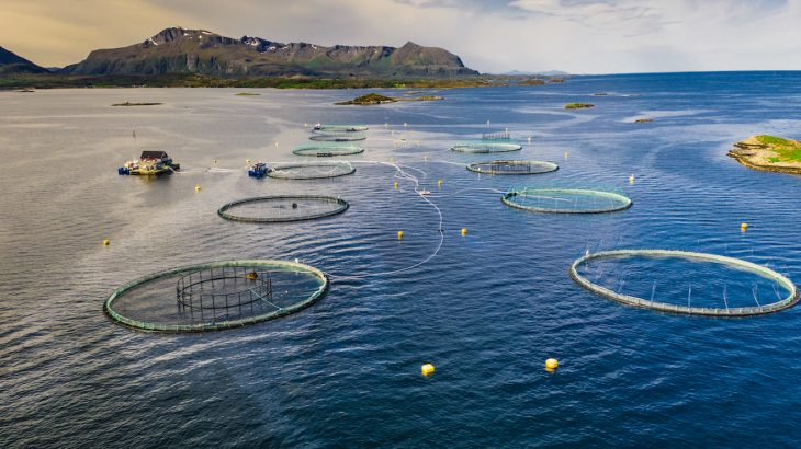 Focusing on individual fish populations is not an effective strategy to protect ecosystems from the damage and insecurity associated with overfishing.