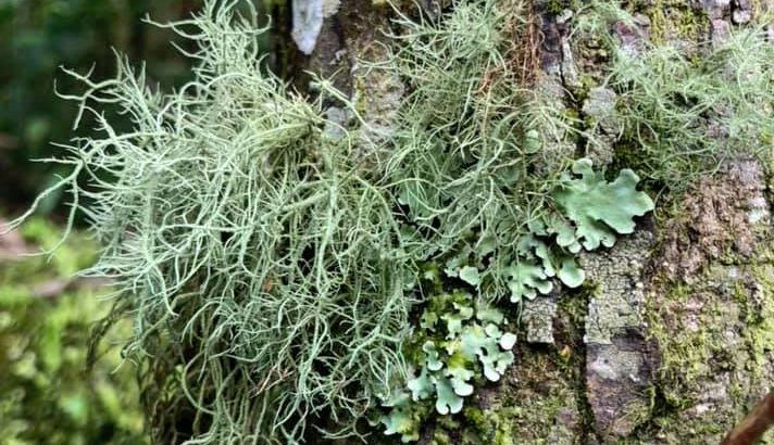 New research has found that lichens were surprisingly resilient after the asteroid that killed the dinosaurs struck, and lived on even while other plant life quickly died off.