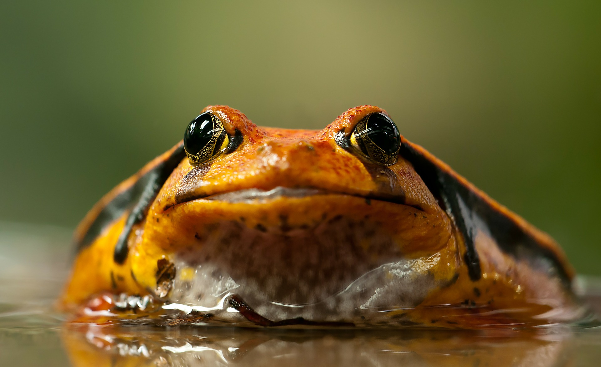 Are Amphibians Cold Blooded? • Earth.com